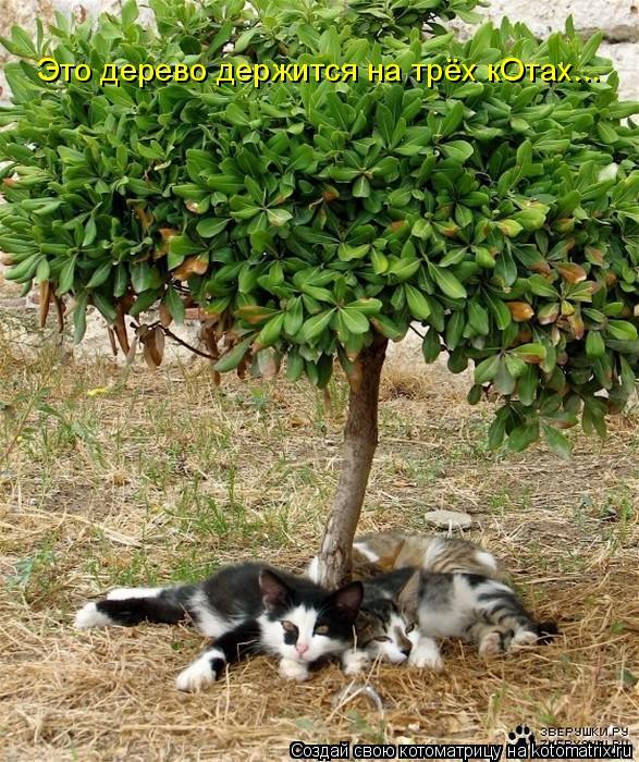 Котоматрица: Это дерево держится на трёх кОтах...