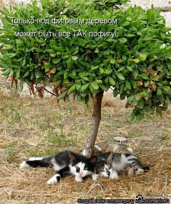 Котоматрица: Только под фиговым деревом может быть все ТАК пофигу!