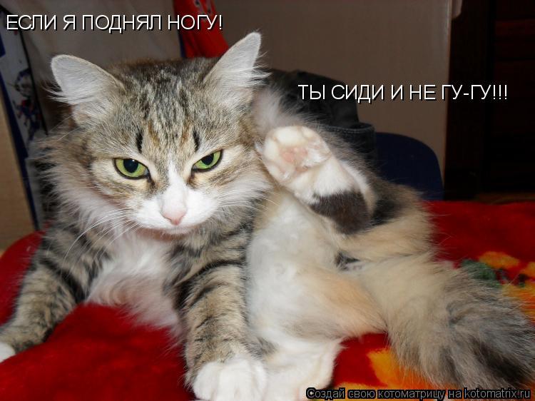Котоматрица: ЕСЛИ Я ПОДНЯЛ НОГУ! ТЫ СИДИ И НЕ ГУ-ГУ!!!