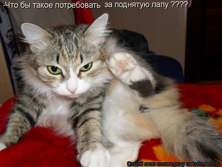 Котоматрица: -Что бы такое потребовать за поднятую лапу ????