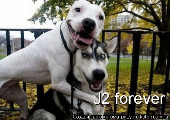 Котоматрица: J2 forever