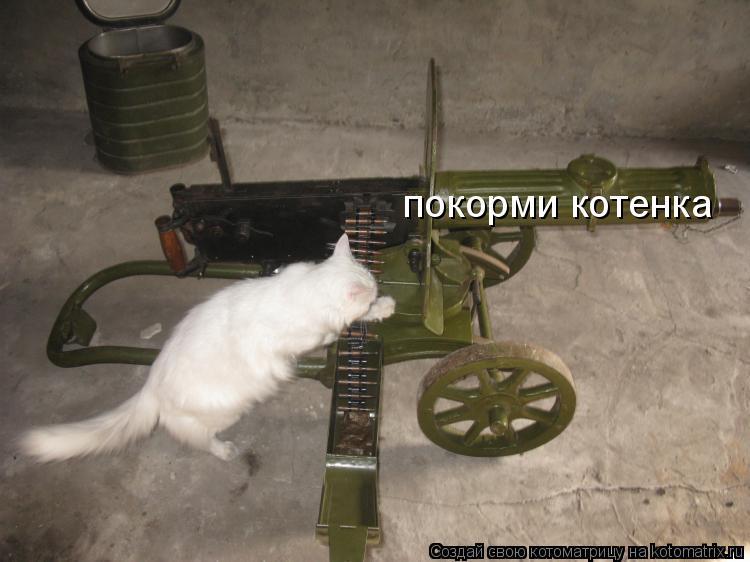Котоматрица: покорми котенка