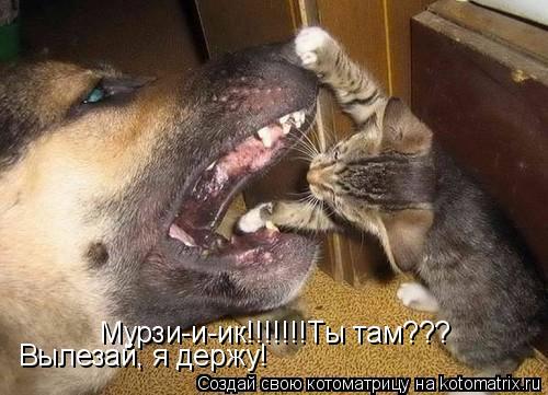 Котоматрица: Мурзи-и-ик!!!!!!!Ты там??? Вылезай, я держу!