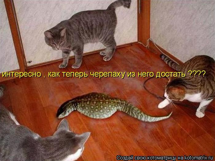 Котоматрица: интересно , как теперь черепаху из него достать ????