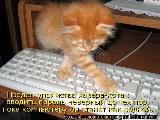Котоматрица: Предел упрямства хакера-кота : вводить пароль неверный до тех пор пока компьютеру он станет как родной...