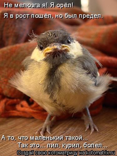 Котоматрица: Не мелюзга я! Я орёл! Я в рост пошёл, но был предел. Так это... пил, курил, болел... А то, что маленький такой...