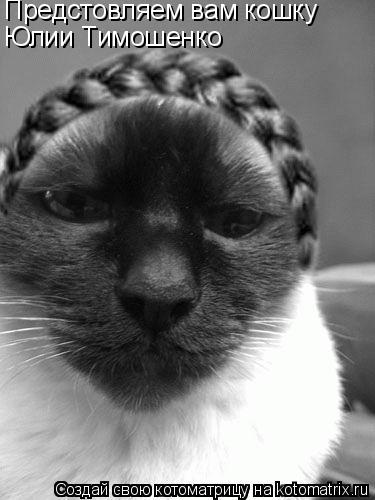 Котоматрица: Предстовляем вам кошку Юлии Тимошенко