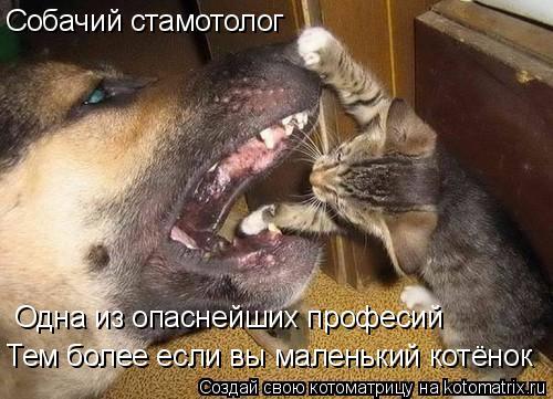 Котоматрица: Собачий стамотолог Одна из опаснейших професий Тем более если вы маленький котёнок