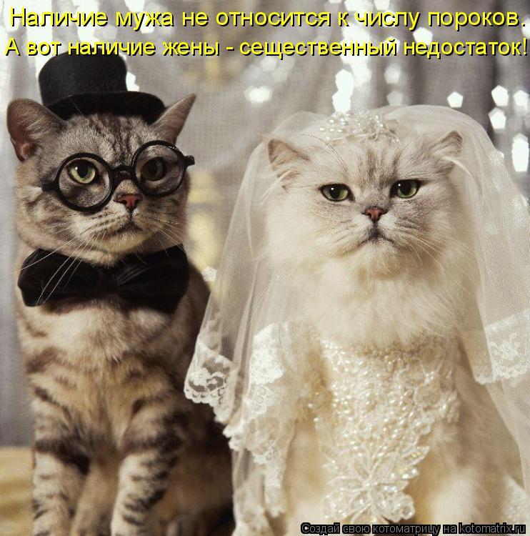 Котоматрица: Наличие мужа не относится к числу пороков. А вот наличие жены - сещественный недостаток!