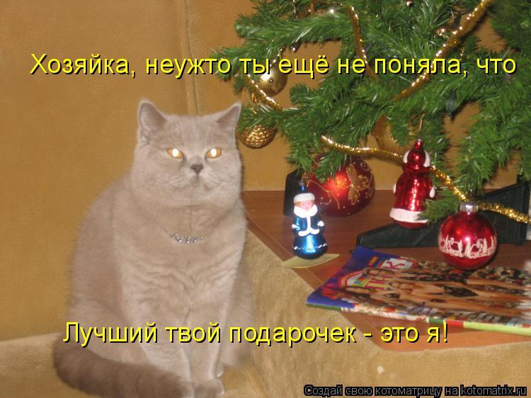 Котоматрица: Лучший твой подарочек - это я! Хозяйка, неужто ты ещё не поняла, что