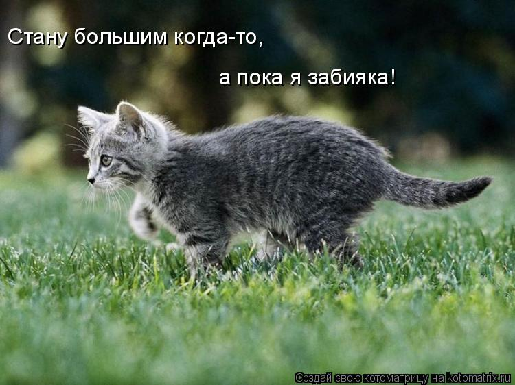 Котоматрица: Стану большим когда-то, а пока я забияка!
