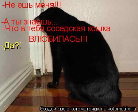 Котоматрица: -Не ешь меня!!! -А ты знаешь... -Что в тебя соседская кошка  ВЛЮБИЛАСЬ!!! -Да?!