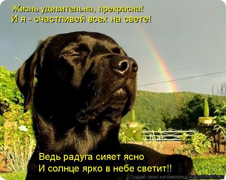 Котоматрица: Жизнь удивительна, прекрасна! И я - счастливей всех на свете! Ведь радуга сияет ясно И солнце ярко в небе светит!!