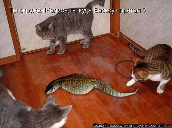 Котоматрица: Ты окружён!Кались,ты куда Ваську спрятал!?