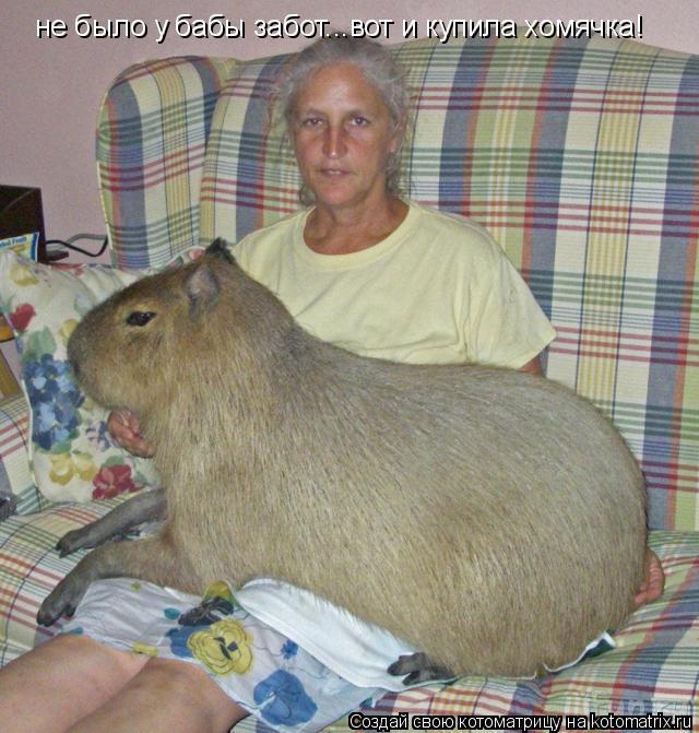 Котоматрица: не было у бабы забот...вот и купила хомячка!