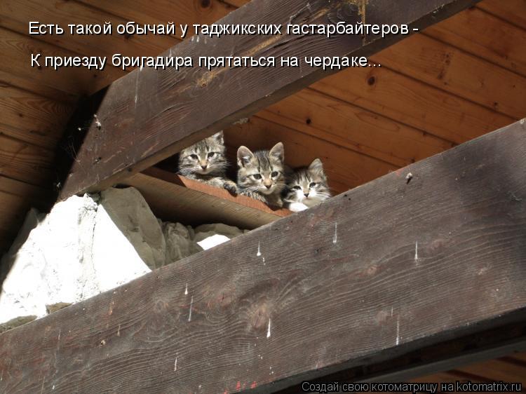 Котоматрица: Есть такой обычай у таджикских гастарбайтеров -  К приезду бригадира прятаться на чердаке...