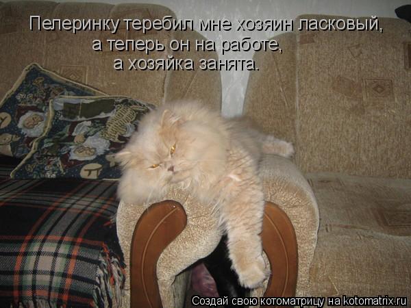Котоматрица: Пелеринку теребил мне хозяин ласковый, а теперь он на работе, а хозяйка занята.