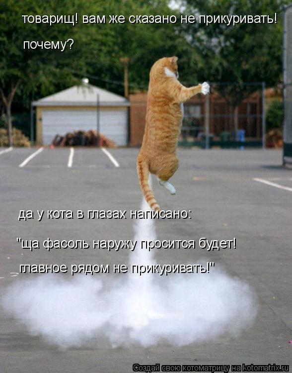 """Котоматрица: товарищ! вам же сказано не прикуривать!  почему? да у кота в глазах написано: """"ща фасоль наружу просится будет! главное рядом не прикуривать!"""""""