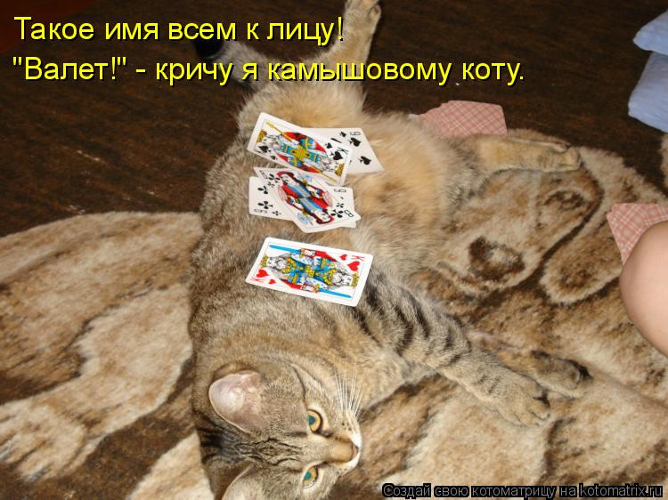 """Котоматрица: Такое имя всем к лицу! """"Валет!"""" - кричу я камышовому коту."""