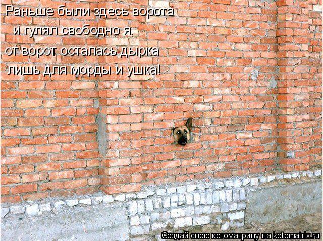 Котоматрица: Раньше были здесь ворота и гулял свободно я, от ворот осталась дырка лишь для морды и ушка!