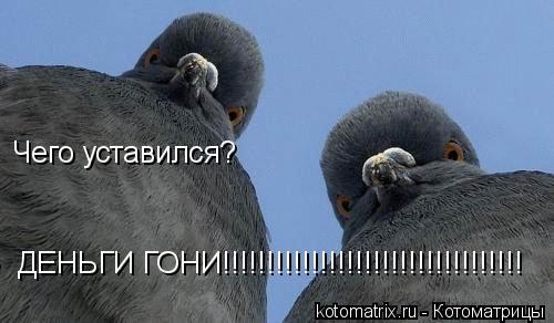 Котоматрица: Чего уставился? ДЕНЬГИ ГОНИ!!!!!!!!!!!!!!!!!!!!!!!!!!!!!!!!!!