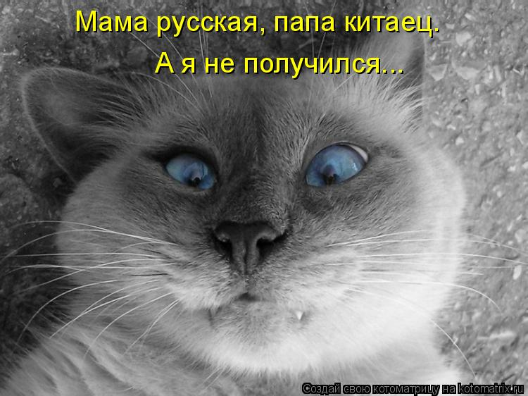Котоматрица: Мама русская, папа китаец. А я не получился...