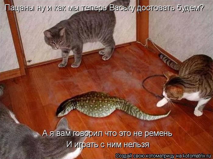 Котоматрица: Пацаны ну и как мы теперь Ваську достовать будем? А я вам говорил что это не ремень И играть с ним нельзя