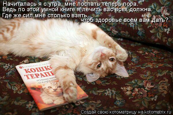 Котоматрица: Начиталась я с утра, мне поспать теперь пора. Ведь по этой умной книге я лечить вас всех должна. Где же сил мне столько взять, чтоб здоровье в