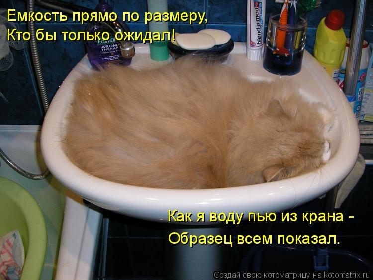 Котоматрица: Емкость прямо по размеру, Кто бы только ожидал! Как я воду пью из крана - Образец всем показал.