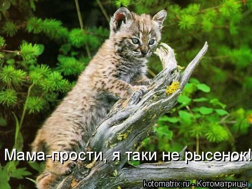 Котоматрица: Мама-прости, я таки не рысенок!