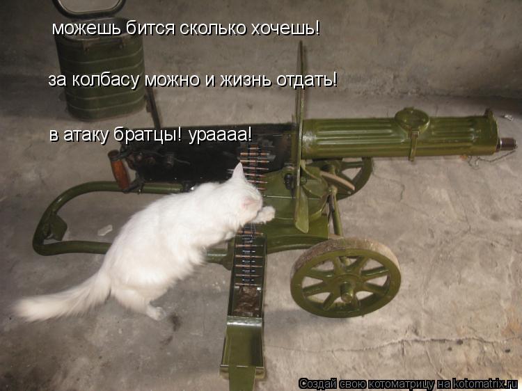 Котоматрица: можешь бится сколько хочешь! за колбасу можно и жизнь отдать! в атаку братци в атаку братцы! ураааа!