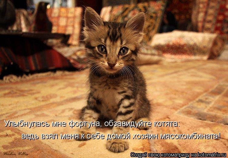 Котоматрица: Улыбнулась мне фортуна, обзавидуйте котята: ведь взял меня к себе домой хозяин мясокомбината!