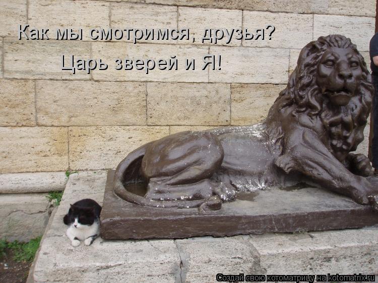 Котоматрица: Как мы смотримся, друзья? Царь зверей и Я!