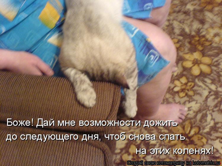 Котоматрица: Боже! Дай мне возможности дожить до следующего дня, чтоб снова спать на этих коленях!