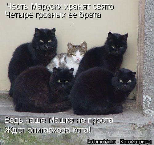 Котоматрица: Честь Маруски хранят свято Четыре грозных ее брата Ведь наше Машка не проста Ждет олигархова кота!