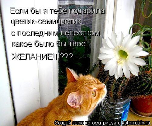 Котоматрица: Если бы я тебе подарила цветик-семицветик  с последним лепестком,  какое было бы твое  ЖЕЛАНИЕ!!!???