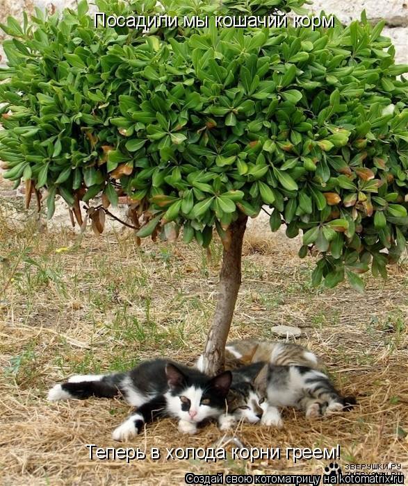 Котоматрица: Теперь в холода корни греем! Посадили мы кошачий корм