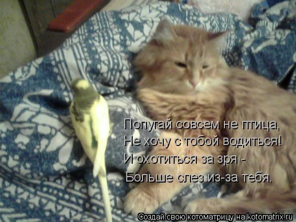 Котоматрица: Попугай совсем не птица, Не хочу с тобой водиться! И охотиться за зря - Больше слез из-за тебя.
