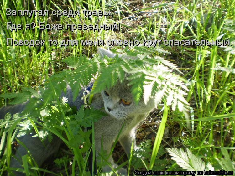 Котоматрица: Заплутал среди травы, Где я? Боже праведный!  Поводок то для меня словно круг спасательный.