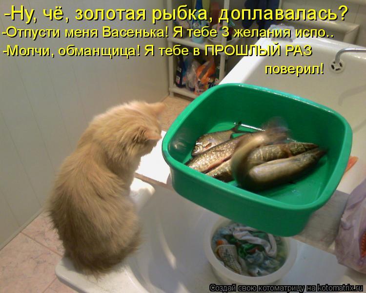 Котоматрица: -Ну, чё, золотая рыбка, доплавалась? -Отпусти меня Васенька! Я тебе 3 желания испо.. -Молчи, обманщица! Я тебе в ПРОШЛЫЙ РАЗ  поверил!