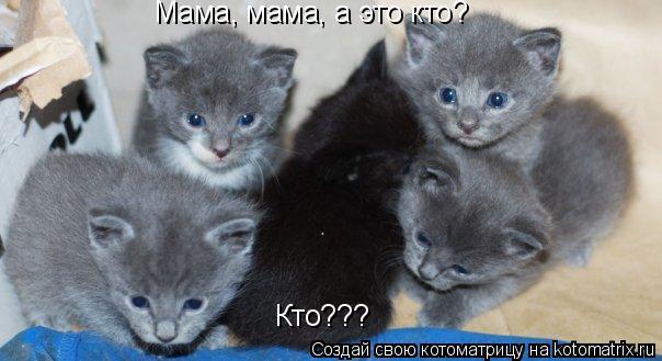 Котоматрица: Мама, мама, а это кто?  Кто???