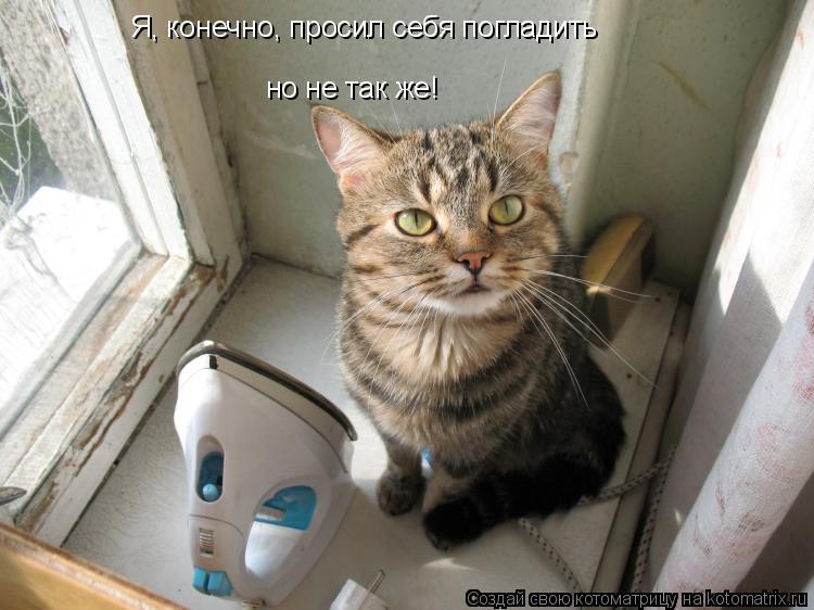 Котоматрица: Я, конечно, просил себя погладить но не так же!