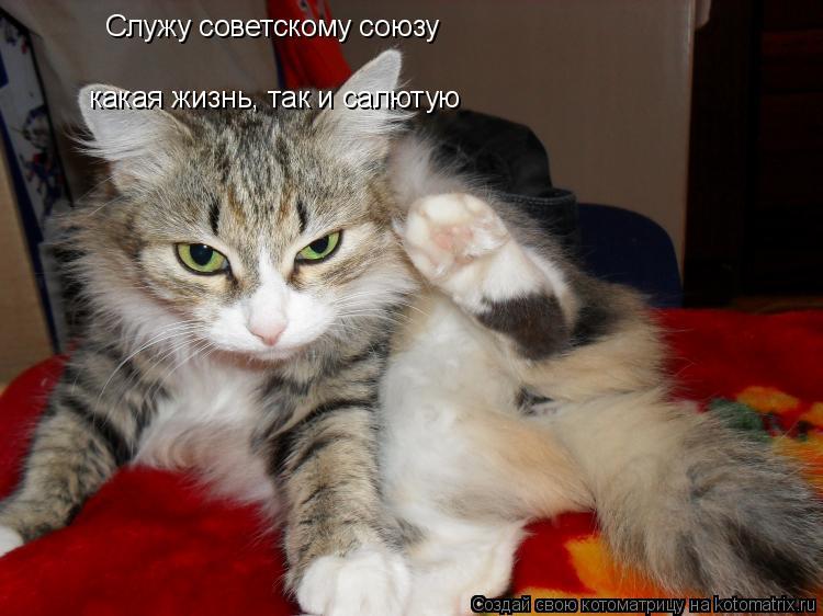 Котоматрица: Служу советскому союзу какая жизнь, так и салютую