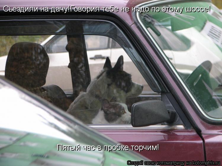 Котоматрица: Сьездили на дачу!Говорил тебе не надо по этому шоссе! Пятый час в пробке торчим!