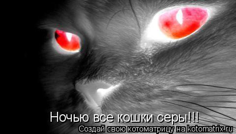 Котоматрица: Ночью все кошки серы!!!
