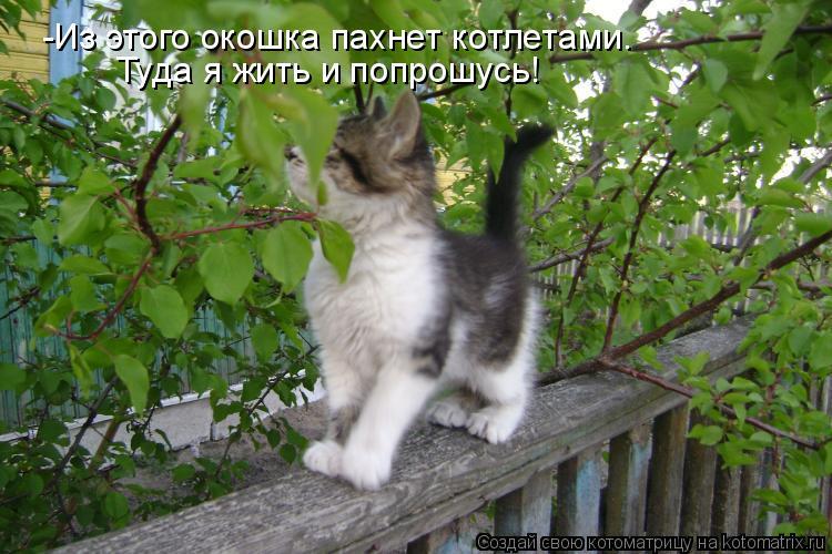 Котоматрица: -Из этого окошка пахнет котлетами. Туда я жить и попрошусь!