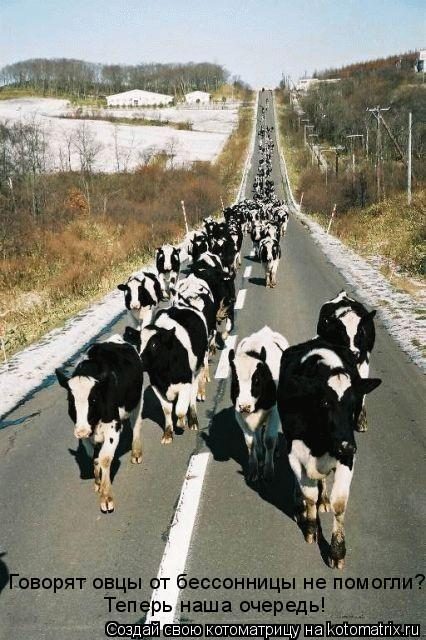 Котоматрица: Говорят овцы от бессонницы не помогли? Теперь наша очередь!