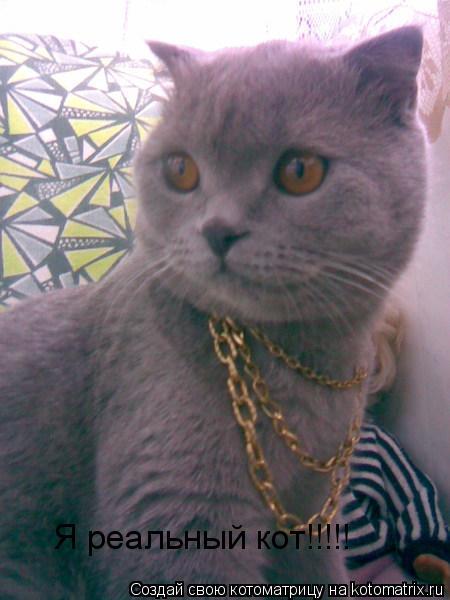 Котоматрица: Я реальный кот!!!!!