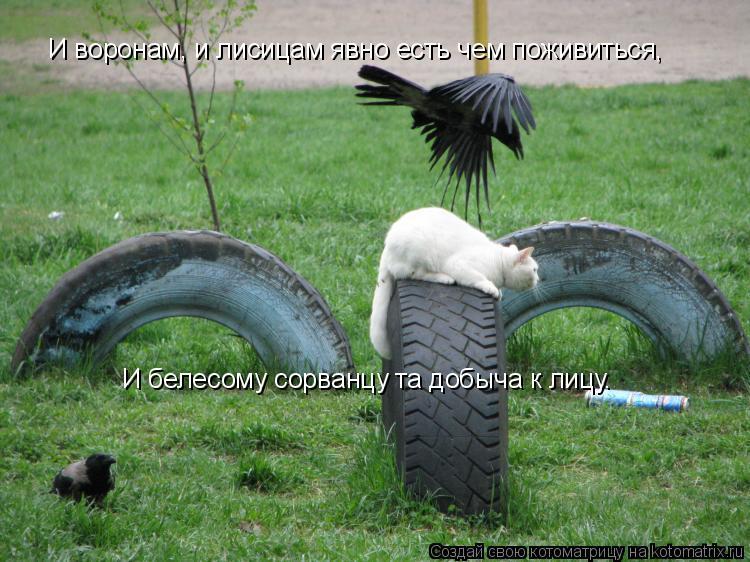 Котоматрица: И воронам, и лисицам явно есть чем поживиться, И белесому сорванцу та добыча к лицу.