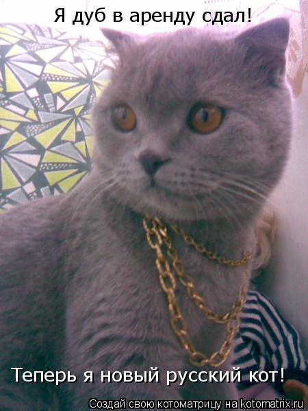 Котоматрица: Я дуб в аренду сдал! Теперь я новый русский кот!